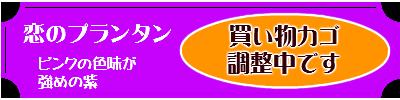 パナシュドール(羽根ペンセット) 恋のプランタン-ピンクの色味が強めの紫